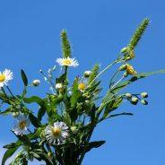 Wildblumenstrauß